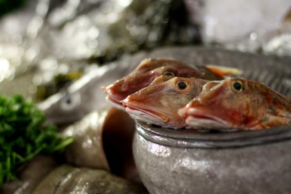красивая выкладка рыбы фото на витрине